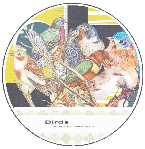 Parrot Partnervermittlung 16. November